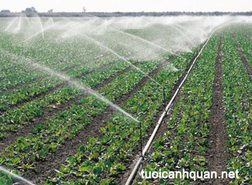 Tưới phun mưa nông nghiệp – hệ thống tưới rau