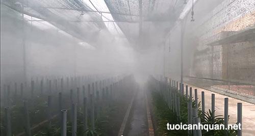 Tưới phun sương cho Lan