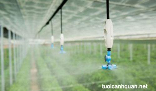 Tưới phun sương rau – hệ thống tưới rau