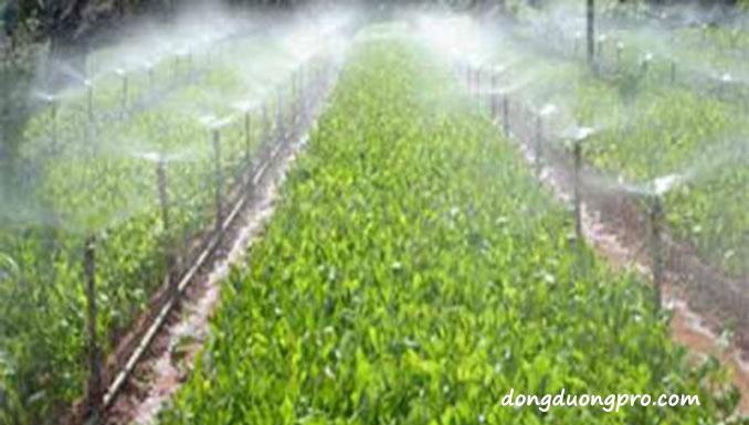 Tính toán hệ thống tưới phun mưa trồng theo luống.